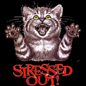 Stressed Out Cat Thumbnail